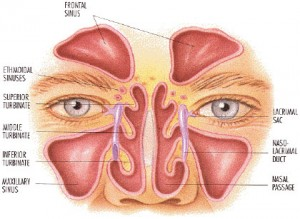 What are the nasal sinuses? - Isaac Namdar, MD
